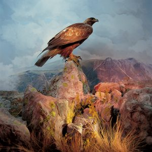 A Taxidermy golden eagle in its diorama at the World Wildlife Gallery in Kendal Museum